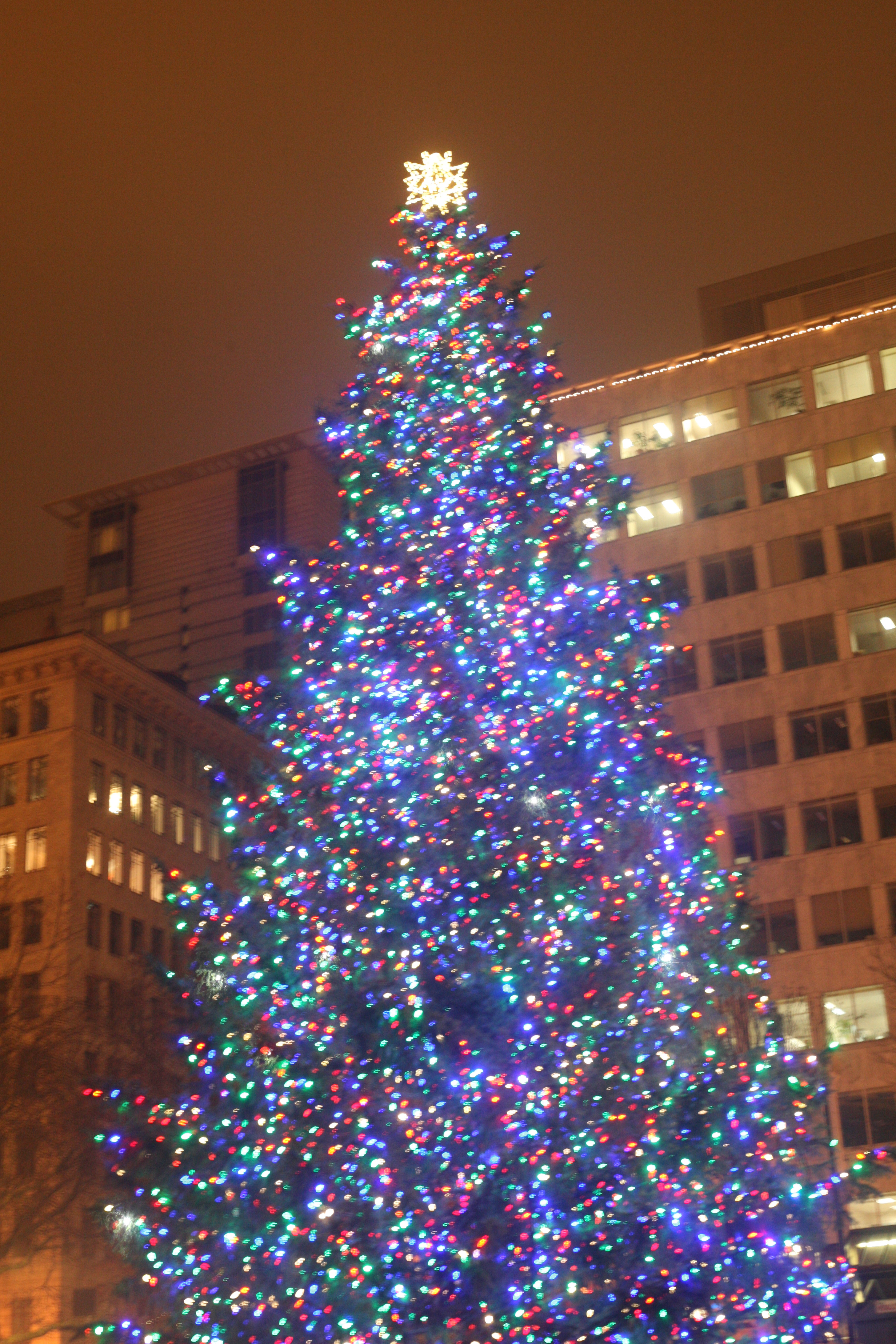 Portland Christmas Tree.Portland Christmas Tree Travel With Laughter