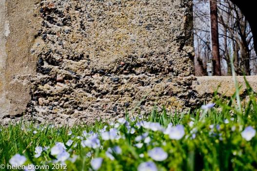 flowers against building