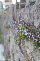 flowers growing on rock wall