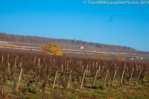 Wine Tour-4838