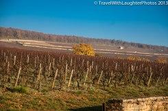 Wine Tour-4842