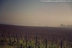 Wine Tour-4843