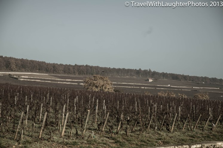 Wine Tour-4844