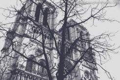 Notre Dame -5207
