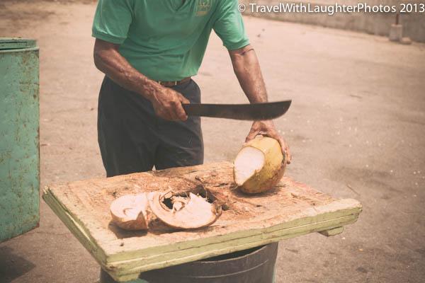 Coconut-8269
