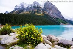 Lake Louise-9959