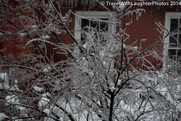Ice storm 2014-1037