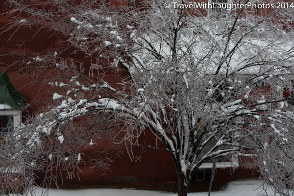 Ice storm 2014-1038