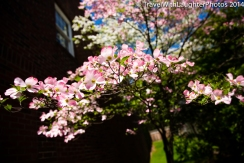Doylestown Spring Flowers 2014-1189
