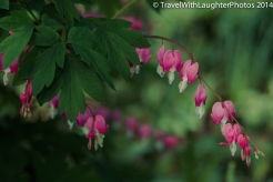 Doylestown Spring Flowers 2014-1205
