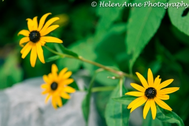Doylestown Walk July 2014-2581