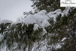 Snow March 2015-4390