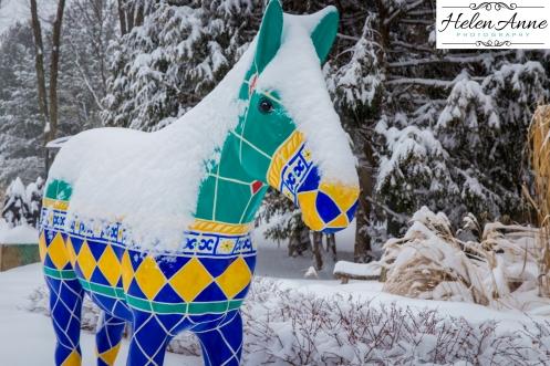 Snow March 2015-4412
