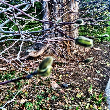 There trees are budding!