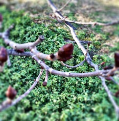 The trees are starting to bud!