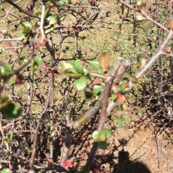 The bushes are starting to bud!