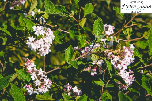 Doylestown Spring 2015-4659-5