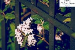Doylestown Spring 2015-4660-6