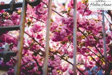 Doylestown Spring 2015-4671-14