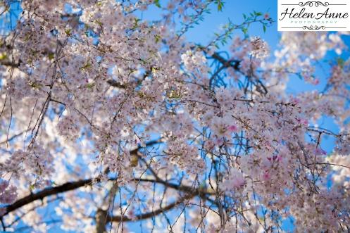Doylestown Spring 2015-4692-24