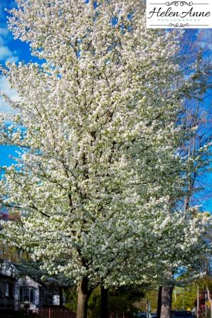 Doylestown Spring 2015-4726-28