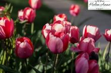 Doylestown Spring 2015-4730-29