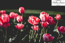 Doylestown Spring 2015-4732-30