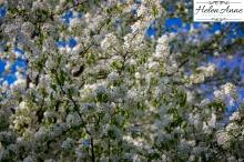 Doylestown Spring 2015-4734-31