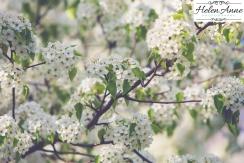 Doylestown Spring 2015-4737-34