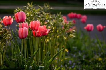 Doylestown Spring 2015-4738-35