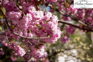 Doylestown Spring 2015-4746-37