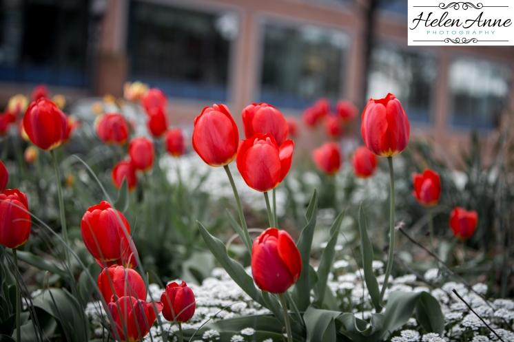 Doylestown Spring 2015-4765-41