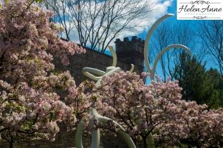 Doylestown Spring 2015-4815-14