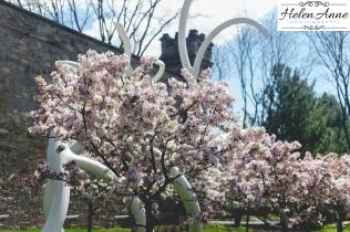 Doylestown Spring 2015-4818-15