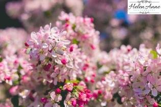 Doylestown Spring 2015-4821-17