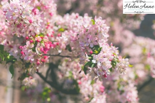 Doylestown Spring 2015-4822-18