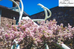 Doylestown Spring 2015-4828-24