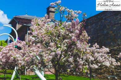 Doylestown Spring 2015-4831-26