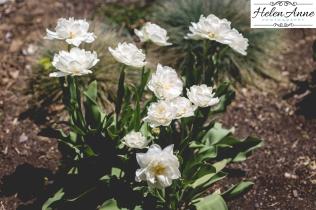 Doylestown Spring 2015-4844-32