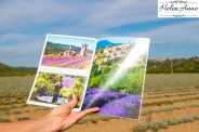 Look there is always lavender in bloom in Provence! - Emily
