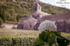 Provence and Paris 2015-6078-18