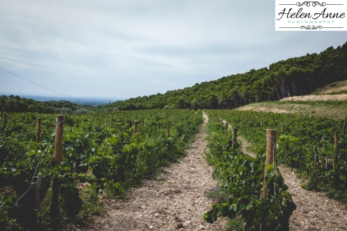 A walk through the vineyards!