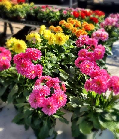Spring Plants!