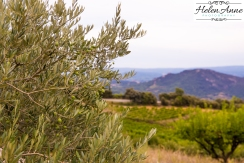 Provence and Paris 2015-6444-14