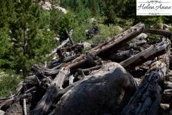 Rocky Mountain-9039-30