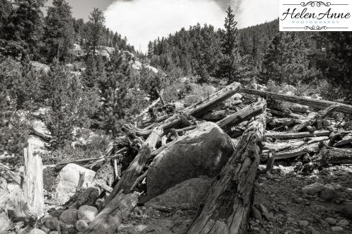 Rocky Mountain-9041-31