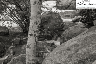 Rocky Mountain-9059-43