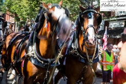 Clydesdales Doylestown 2016-9814-5