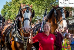 Clydesdales Doylestown 2016-9824-8