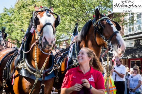 Clydesdales Doylestown 2016-9825-9